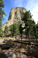 Devils Tower Above the Trees