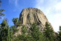 Devils Tower Over Trees
