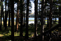 Fiddlers Lake Through Pines