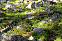 Boulders and Whortleberry Shrubs