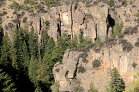 Trees and Shell Canyon Walls