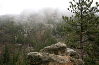 Foggy view from Needles Highway